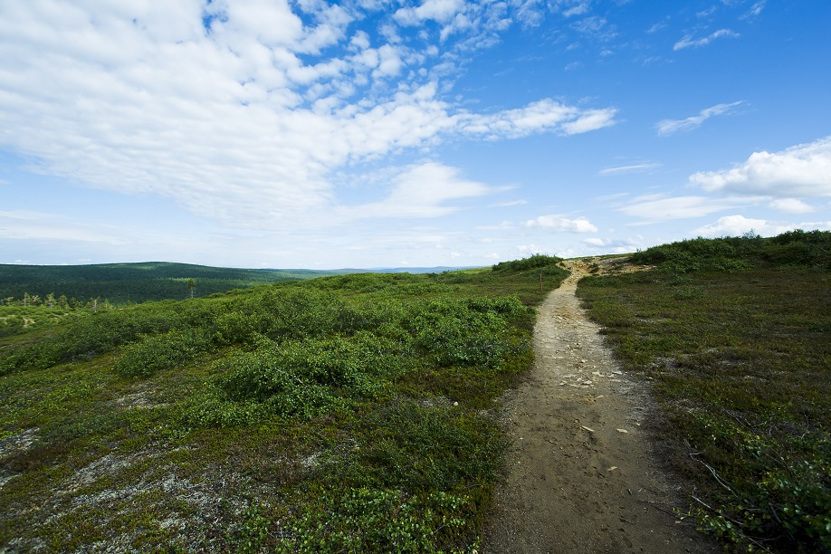 Walking a path:  The twists and turns of life