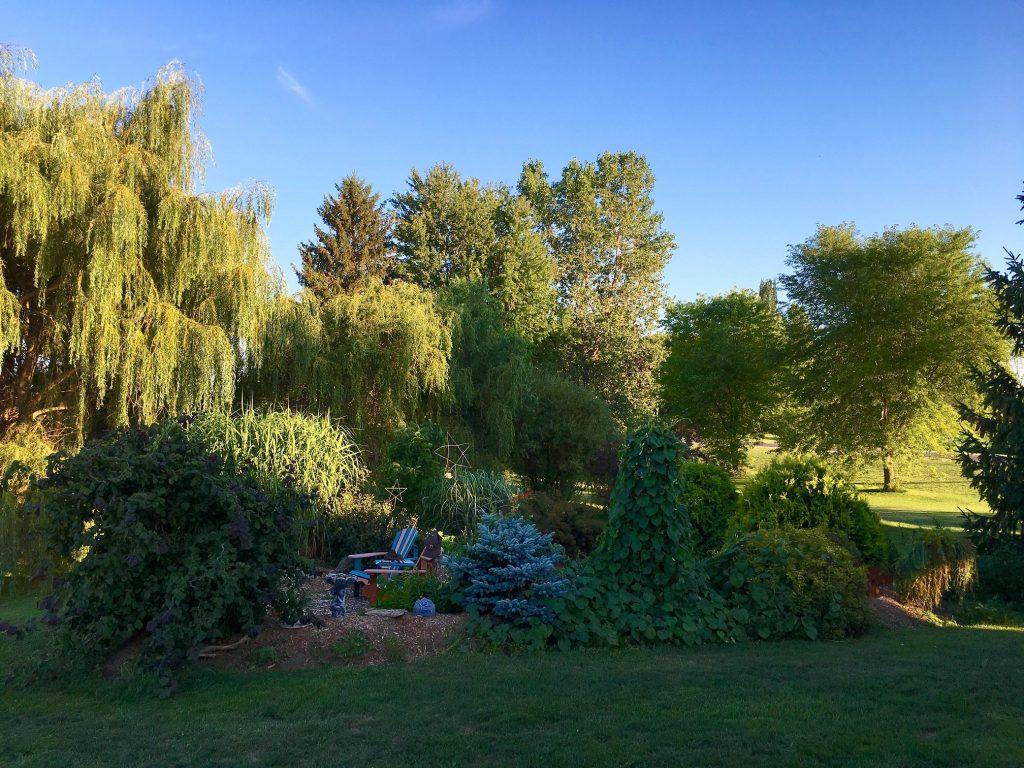 Velvettes garden1
