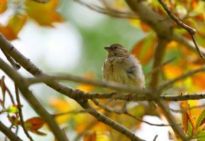 pexels-photo-bird