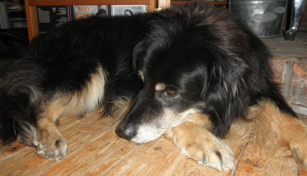 A black and brown dog sleeps on a wood floor.