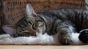 Close up of sleeping cat