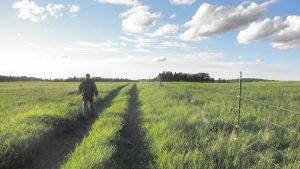 Man walks through a grassy green pasture