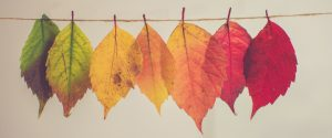 Different coloured leaves strung along a piece of string