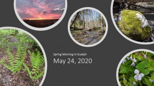 Sites of spring: ferns, mossy rocks, flowers, sunrise. Text reads: Spring Morning in Guelph May 24, 2020