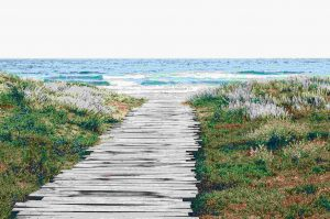 a boardwalk leads to the ocean through grasses