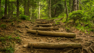 staircase of steps made from logs climbs through a lush, green forest