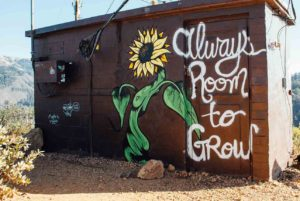 """A sunflower spraypainted on side of a building. Text reads """"Always room to grow"""""""